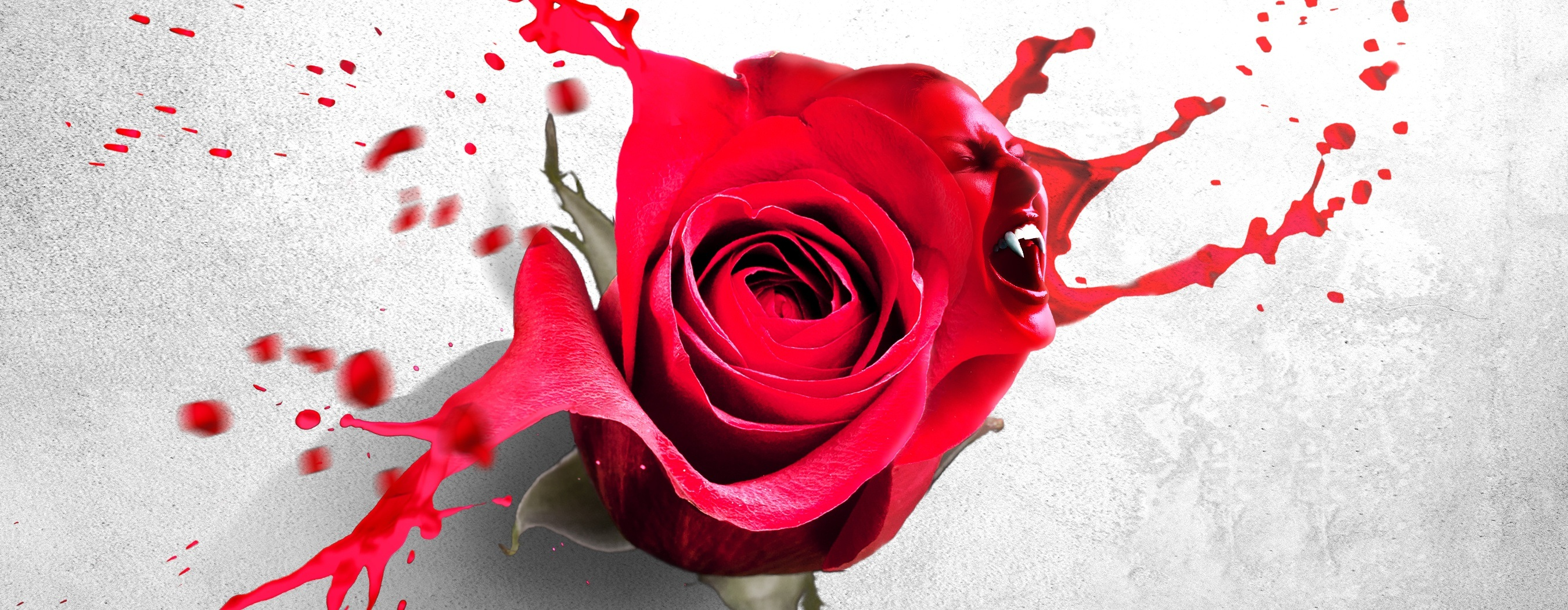 A blood spattered rose